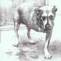 ALICE IN CHAINS - Alice In Chains CD