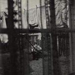 PAUL MCCARTNEY - Chaos And Creation In The Backyard / vinyl bakelit / LP